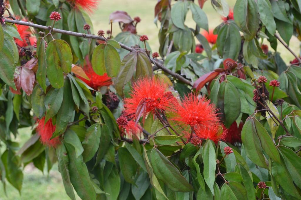 red flowers bogota